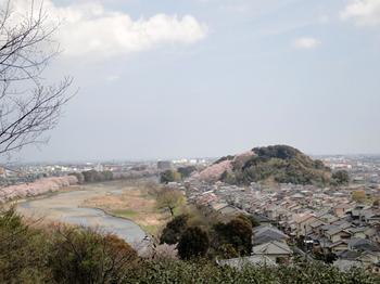 4.10桜.jpg